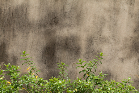 Concrete texture or cement wall texture abstract background with green leaf border in foreground. Banco de Imagens