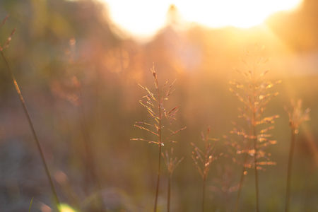 Soft focus meadow flowers in field or grass flower with warn sunrise light for love or natural background. Stock Photo