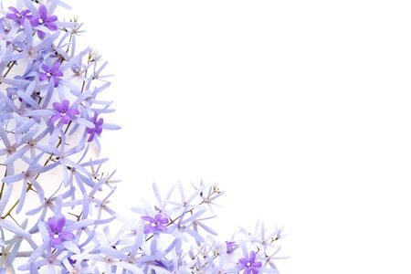 Frame made of purple flowers  on white background. Flat lay, top view.