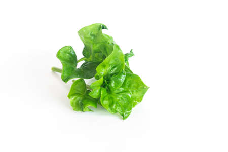 Fresh watercress organic vegetable on white background, Isolated vegetable object.