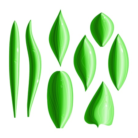 Set of 8 types of shiny green leaves with dew drops Stock Vector - 17899577