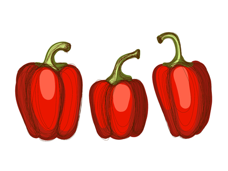 Set of hand drawn sketches of red paprika over white background