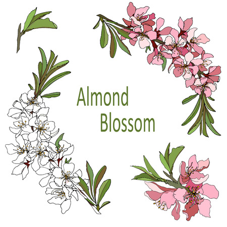illustrated almond blossom flowers