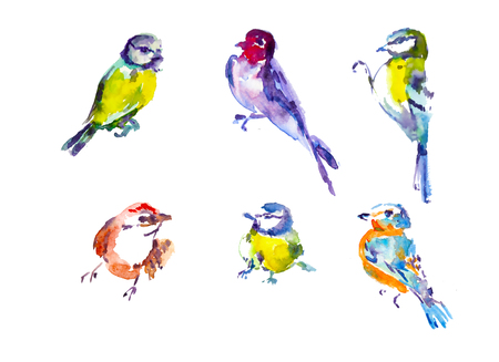 tomtit: Watercolor drawings of small birds Illustration