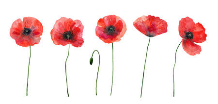 Set of red poppies. Colorful flowers. Watercolor hand drawn illustration isolated on white background.