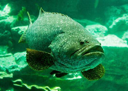 Aquarium fish Stock Photo - 17191979