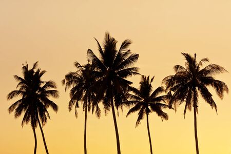 palm tree isolated: Coconut tree silhouette Stock Photo