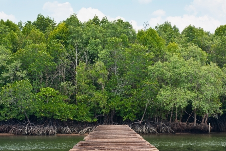 Mangrove forest and bridge in Thailand Asia photo