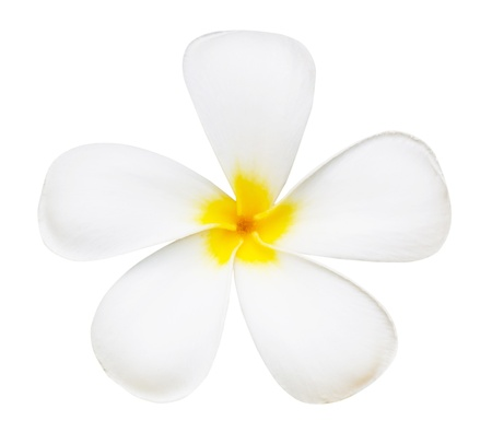 White flower of temple isolated from Thailand photo