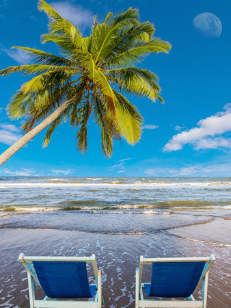 Coconut tree and chairs at clean beach photo