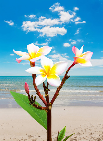 Leelawadee flower vacation at beach in Thailand photo