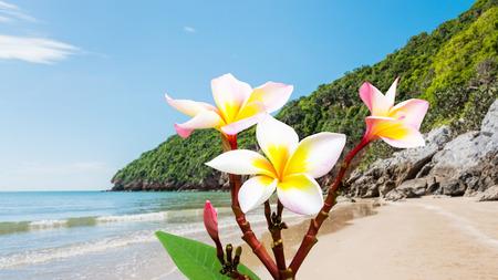 leelawadee: Leelawadee flower at beach on summer