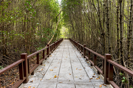 Travel mangrove forest in Thailand photo