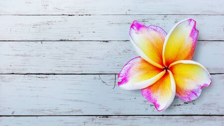 Leelawadee flower isolate on table wooden background