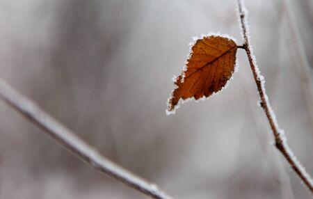 winter: Winter Stock Photo