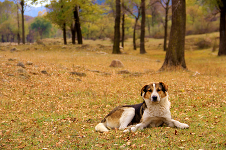 sheepdog: sheepdog