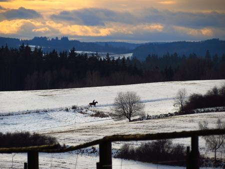 uomo a cavallo: Deserta strada inverno bianco con gli alberi e cavaliere
