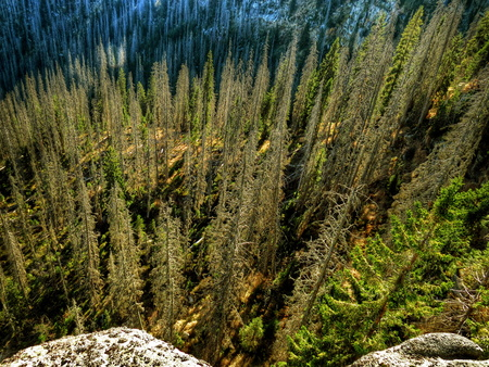 larch tree: Autumn Larch tree forest in the Alps, aerial view Stock Photo