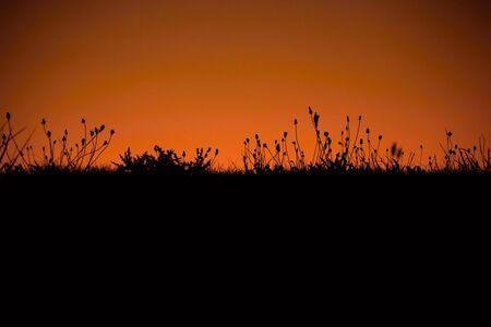 orange sunset: Wild grass silhouette with red  orange sunset background