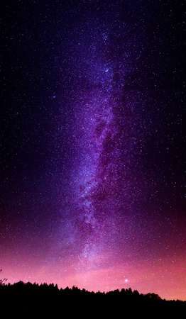 Bosque de noche con pinos bajo un cielo azul oscuro con muchas estrellas, colores completos Foto de archivo