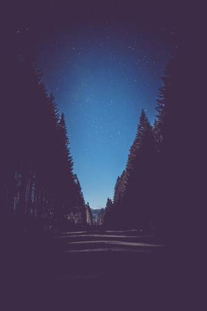 Night Road on dark forest, night sky with star