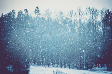 falling snow in the woods, vignetting background Stok Fotoğraf