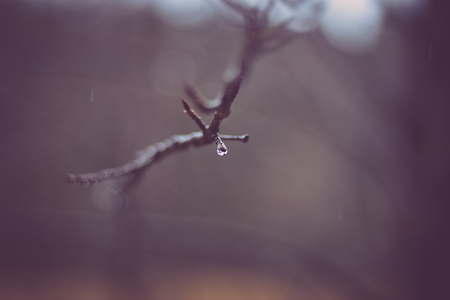 drop of water on a tree branch in the rain, close-up , gorgeous bokeh blurred rain drops in the background