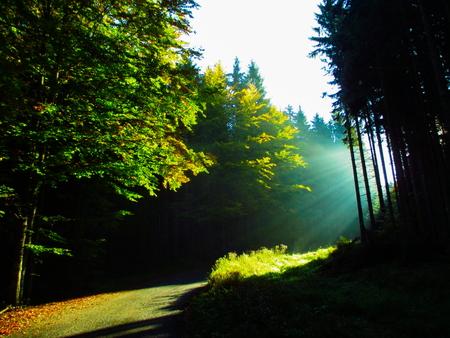 the morning sunrise in the forest, sunbeam
