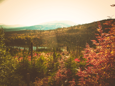the autumn view of a forest in the mountains 写真素材