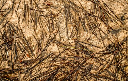 the pattern of reed and golden sand, wallpaper
