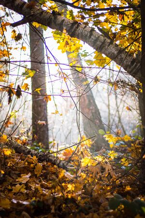 Beautiful autumn scenery of waking the forest from the cold fog