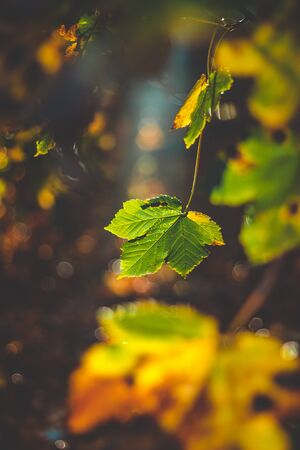 still life of tranquil deciduous dark forest on illuminated leaves Stock fotó
