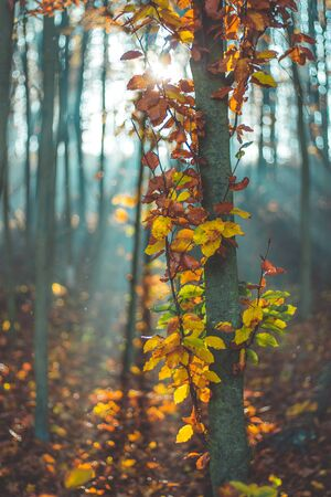 Morning dawn in autumn forest Stock fotó