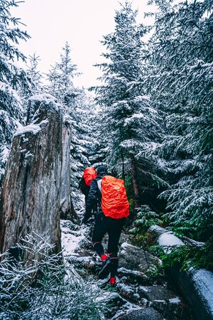the mountain tourism - hike in winter to the top through the forest