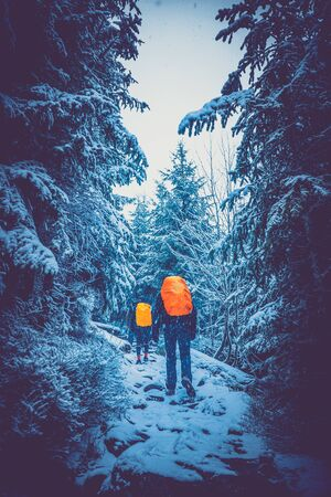 the mountain tourism - hike in winter to the top, group in the forest