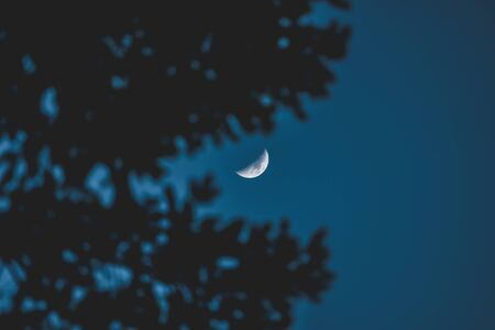 the crescent moon, view through the tree