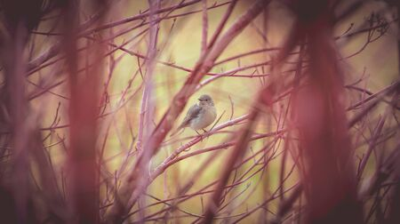 the cute little bird, songbird, in the middle of bushes Stock fotó
