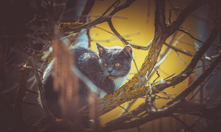 the beautiful dark cat in a tree crown, yellow eyes