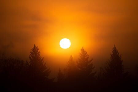 the early spring sunrise on the coniferous forest