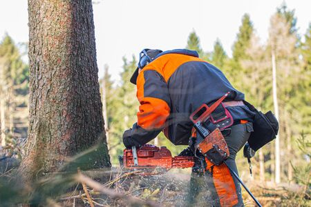 the lumberjack cuts a tree with a chainsaw in the forest Stock fotó