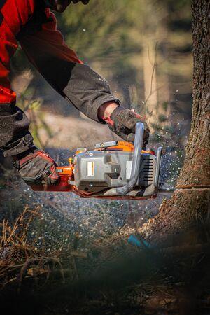 the lumberjack, chainsaw cuts a tree