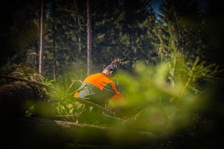 the lumberjack in the forest cuts down trees Stock fotó