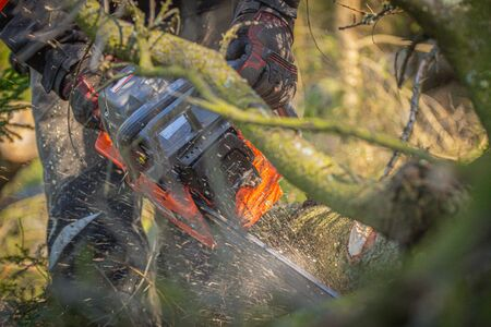 the lumberjack in the woods, saws a branch of a fallen tree with a chainsaw