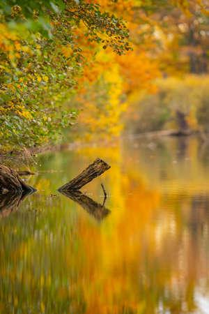the Still life of autumn pond