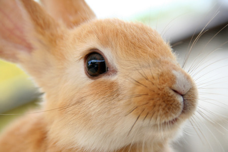 Cute brown baby rabbit Stock Photo