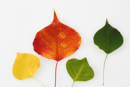 Colorful autumn fall leaves Stock Photo