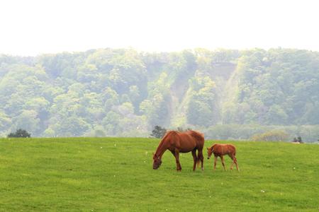 yegua: Con una yegua en un pasto de primavera