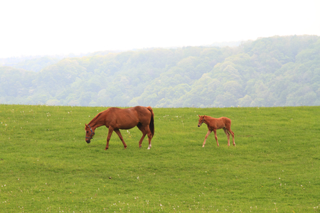 mare and foal: Foal with a mare on a spring pasture