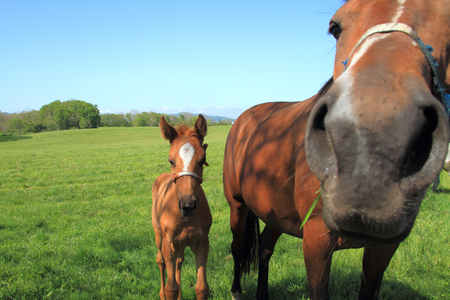 Foal with a mare on a spring pasture