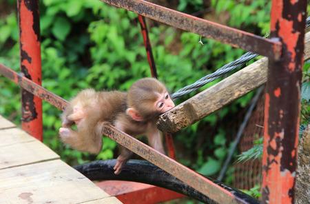 Cute little baby monkey Stockfoto